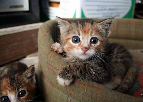 adorable, cat, cats, cute, kittens