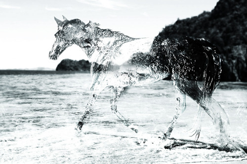 animals, art, beach, horse, horses