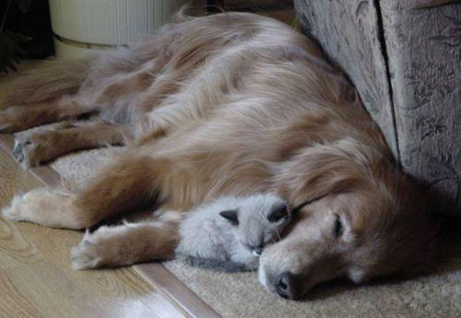 asleep, cat, dog, friends, friendship, sleeping, trust