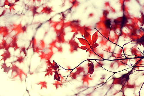 autumn, beautiful, leaves, light, nature