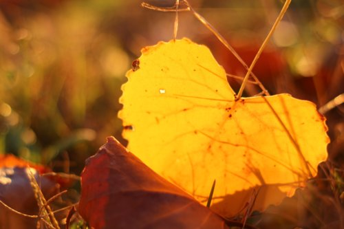 autumn, cute, fall, heart, leaf