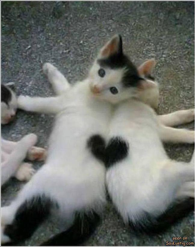 babies, black and white, cats, cute, heart