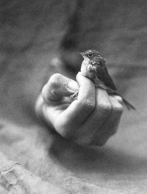 baby bird, bird, black and white, hand, you me and charlie