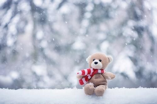 bear, car, cute, photography, snow, sow, teddy bear, teddybear, white, winter