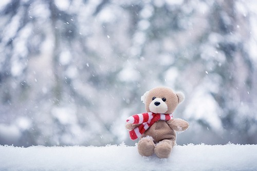 bear, scarf, snow, teddy, teddybear