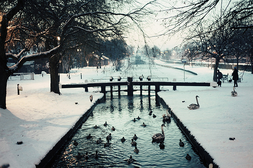beautiful, birds, cool, ducks, landscape, nature, photography, snow, water, winter