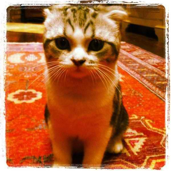 beautiful, cat, cuuute, instangram, meredith