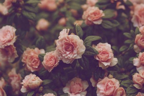 beautiful, flowers, vintage
