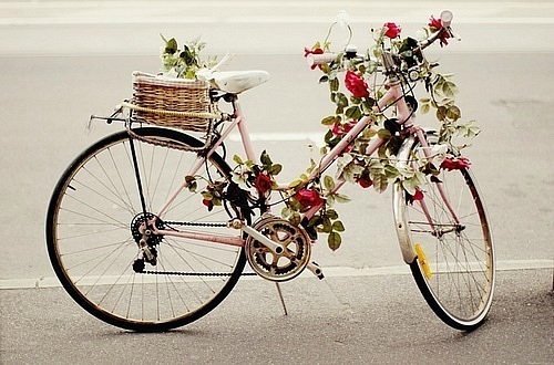 beauty, bicycle, cute, flowers