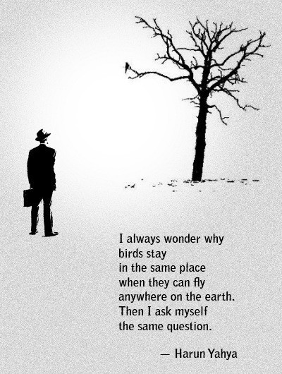 birds, harun yahya, quote, text, travel - image #320015 on ...