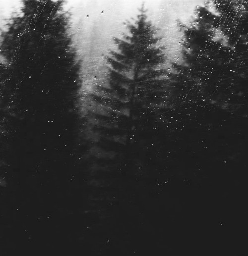 black and white, forest, nature, rain, raining, trees, woods