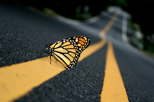 black, butterfly, photography, pretty, road, yellow