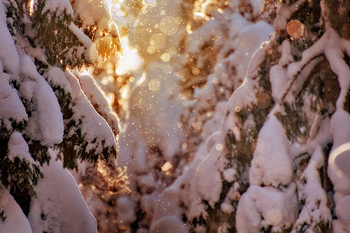 bokeh, light, snow, trees, winter