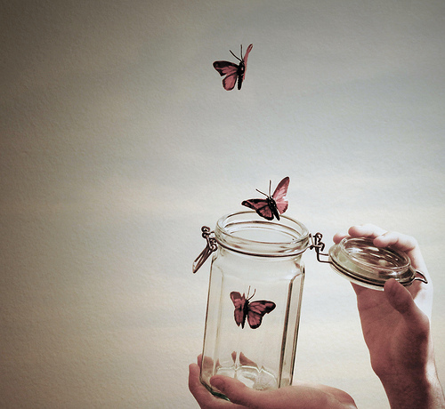 borboletas, butterfly, fly, free, hands, jar, photography, pink