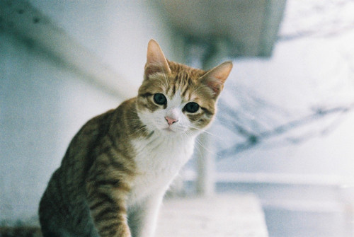 cat, cute, kitty, lovely, vintage