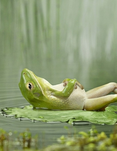 cute, fairytale, frog, lazy, prince