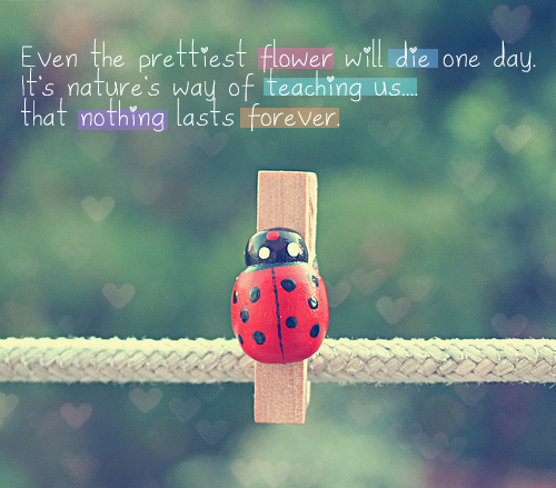 cute, flower, forever, ladybird, quotes