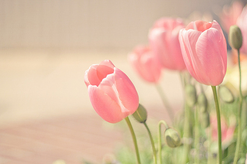 cute, joyhey, pastel, photography, pink