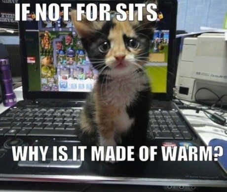 cute, kitten, lol
