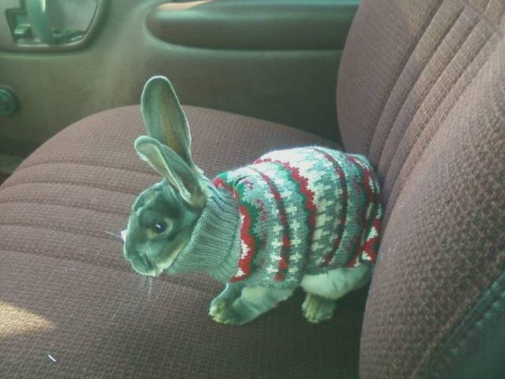 cute, rabbit, sweater