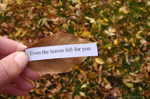 fall, leave fell for you, leaves, love, photography