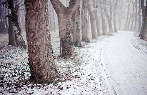 snow, tree, trees, vintage, winter