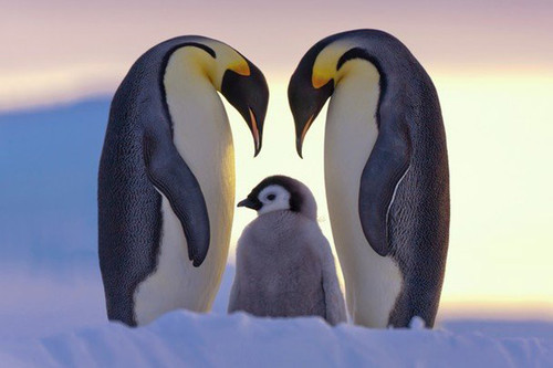 afternoon, antartic, cold, cute, family