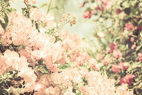 amazing, awesome, beautiful, beauty, brilliant, bunch, darling, flower, flowers, happiness, lovely, natural, nature, photography, pinck, pink, pretty, smile, still life, stunning