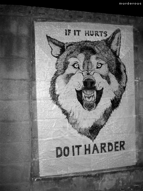 anger wolf, b&w, black and white, cool, harder