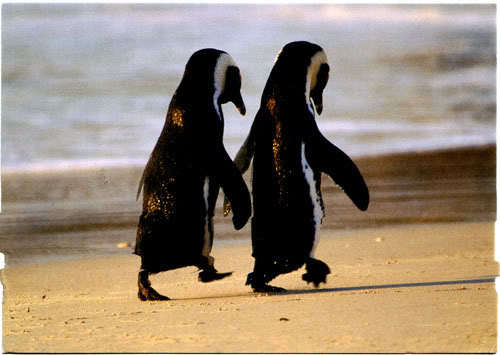 animal, animals, aww, beautiful, cute, hands, penguins, wings, wing, ocean, sea, penguin