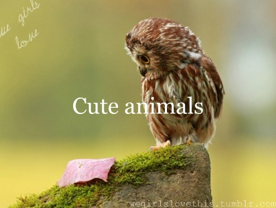 Cute animals with love quotes - photo#21