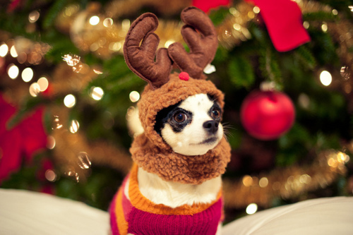 animal, aww, christmas, cute, deer, dog, kawaii, love, photo, photography, picture, rain deer, santa, santa claus