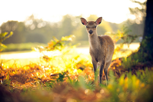 animal, beautiful, bokeh, colorful, cute