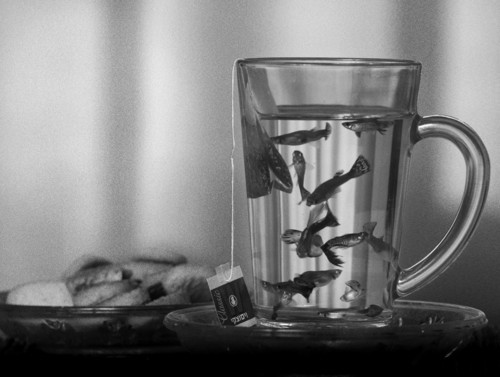 animal, black and white, cup, cute, fish, fishs, glass, gold, mug, nature, photography, plate, tea, vintage, water