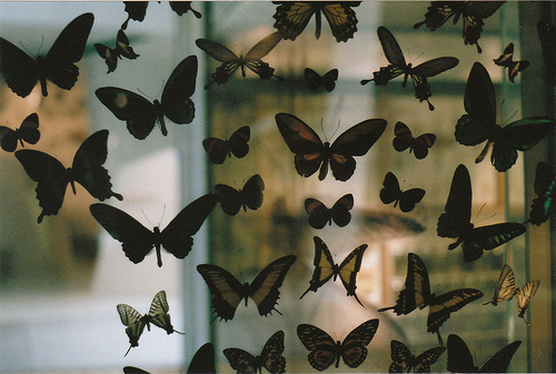 animal, black, borboletas, butterflie, butterflies
