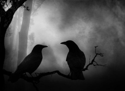 animals, beautiful, birds, black and white, crow, mysterious