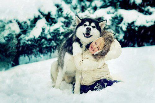 animals, child, hug, husky, kids, snow