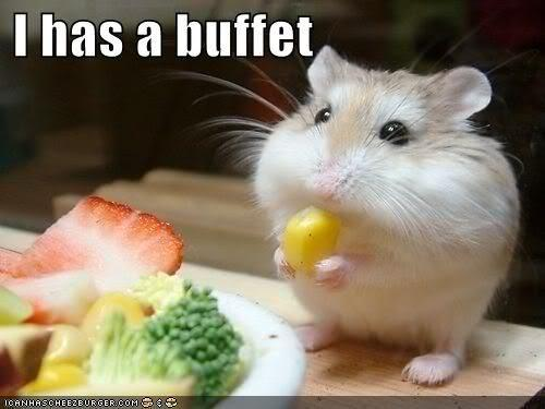 animals, corn, cute, food, funny, hamster, lol