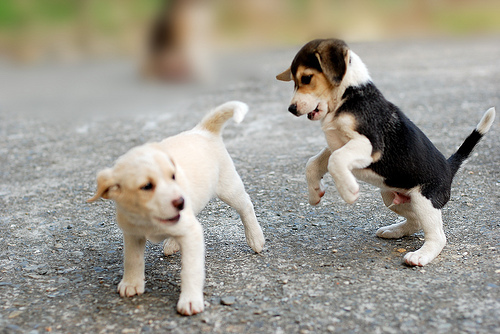 animals, couple, cute, dog, dogs, jump, puppies, puppy, two