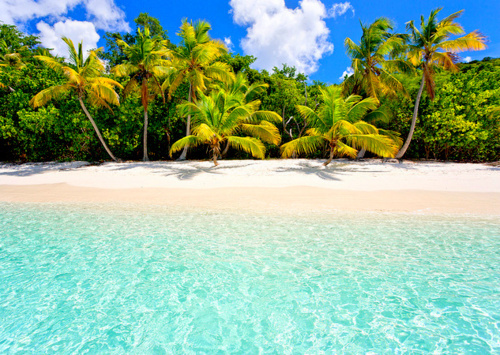 aqua, beach, beautiful, blue, palm tree