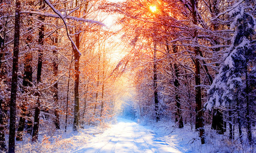art, beautiful, cold, color, colorful, colors, colour, colourful, colours, gorgeous, light, photo, pretty, sky, snow, sow, trees, winter