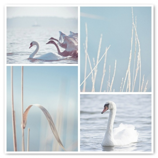 art, blue, breeze, cute, dream, happy, joy, joyful, joyhey, pastel, photography, retro, sea, soft, swan, sweet, vintage, white