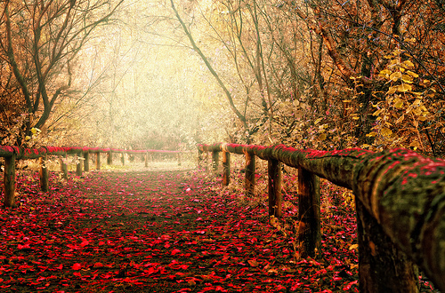 autumn, beautiful, trees, wood