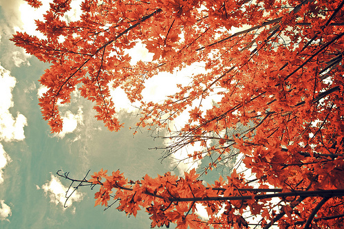autumn, color, fall, leaves, photography