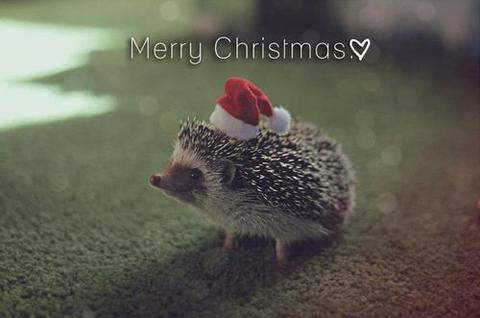 aww, cute, merry christmas