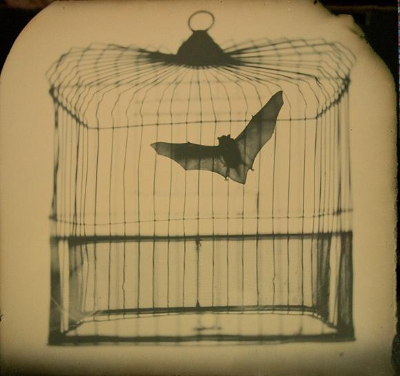 bat, bird cage, vintage