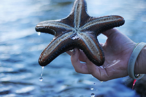 beach, fish, ocean, sea, star