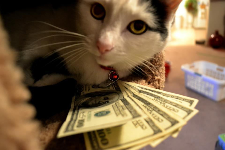 beautiful, bill, cat, cute, dollars