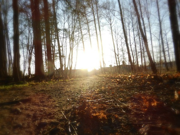beautiful, calm, forest, leaf, sun