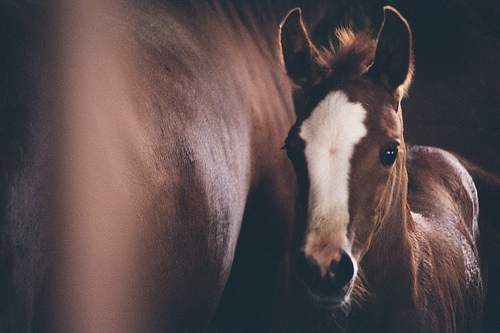 beautiful, cute, foal, horse, pony
